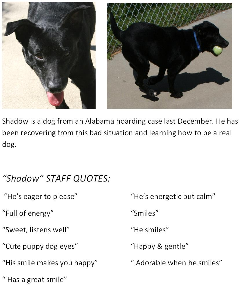New Albany Floyd County Animal Shelter More Staff Quotes On